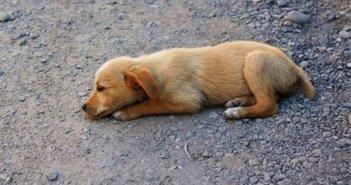Ναύπακτος: Γέμισαν με φόλες Νεροτσουλήθρες και Βαριά – Κίνδυνος για τα ζώα