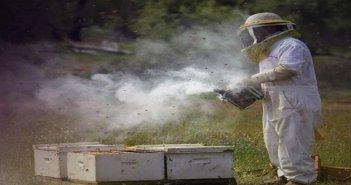 Καραϊσκάκη Ξηρομέρου: Ασυνείδητοι φαρμάκωσαν μελίσσια
