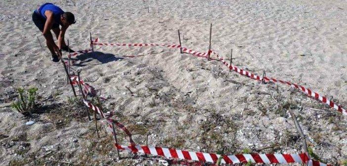 Λευκάδα: Εντοπίστηκαν και σημάνθηκαν νέες φωλιές καρέτα – καρέτα (ΦΩΤΟ)