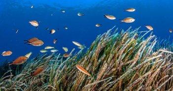Λευκάδα: Eνημερωτικές δράσεις για τα θαλάσσια ξενικά είδη στο Ιόνιο – Γαστρονομικές συναντήσεις