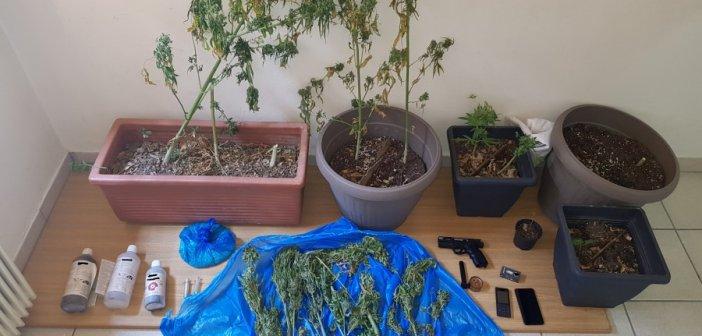 Ευρυτανία: Συλλήψεις για καλλιέργεια χασίς στα Άγραφα (ΔΕΙΤΕ ΦΩΤΟ)