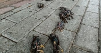 Κακοκαιρία: Απίστευτες εικόνες στη Χαλκίδα με εκατοντάδες νεκρά πουλιά στην παραλία