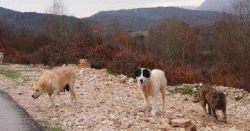 Επίθεση από αδέσποτα τσοπανόσκυλα δέχτηκαν περιηγητές στην ορεινή Αιτωλοακαρνανία