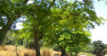 """Καλοκαιρινή περίοδος στο Δήμο Ξηρομέρου, """"μια διαφορετική προσέγγιση"""""""