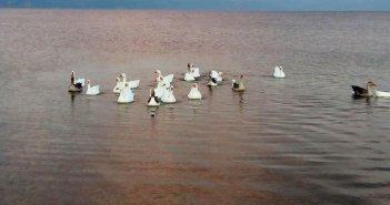 Όμορφες εικόνες από τη λίμνη Τριχωνίδα