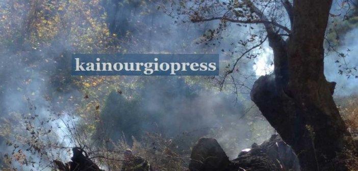 Πυρκαγιά σε λιοστάσι στο Βλοχό (φωτο – βίντεο)