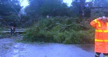 «Ιανός»: Πτώσεις δένδρων σε Κατοχή, Νεοχώρι, Αστακό (ΔΕΙΤΕ ΦΩΤΟ)
