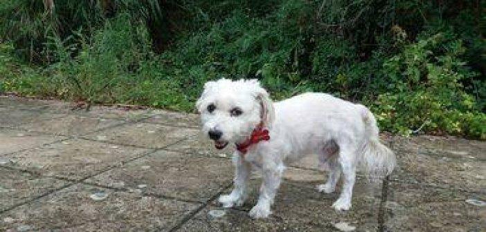 Αγρίνιο: Δεν άντεξε ο σκύλος που χτυπήθηκε από ασυνείδητο οδηγό