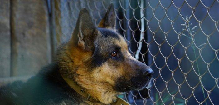 Σκυλιά επιτέθηκαν σε 2χρονο στην Ουκρανία και του έκοψαν τους όρχεις – Χαροπαλεύει το αγόρι