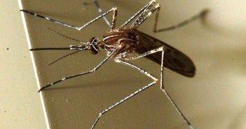 Ξάνθη: Αυξάνονται τα κρούσματα του ιού του Δυτικού Νείλου