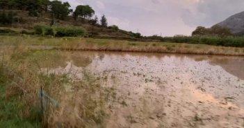 Η Κάτω Βασιλική γλίτωσε τα χειρότερα – Ζημιές σε καλλιέργειες (VIDEO)