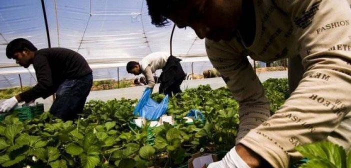 Δεν είχαν αναλάβει το κόστος του τεστ για να ανοίξουν τα σύνορα στους εργάτες γης