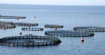 Κάλαμος: Ψήφισμα-διαμαρτυρία για την επέκταση των υφιστάμενων υδατοκαλλιεργειών