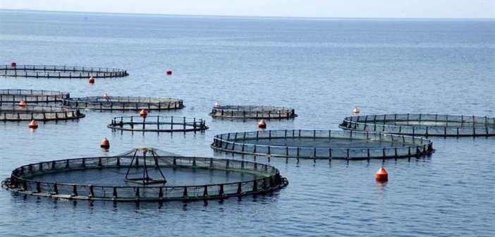 Επιστολή Τριανταφυλλάκη στην ΚΕΔΕ για τις υδατοκαλλιέργειες στο Ξηρόμερο