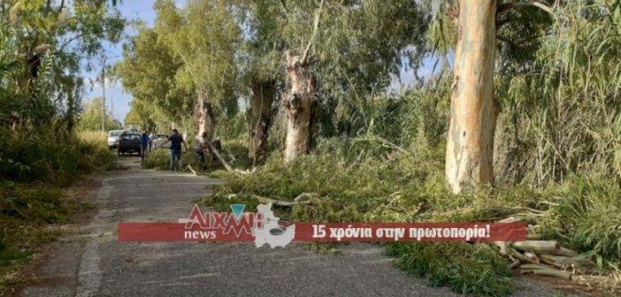 Μεσολόγγι: Καθαρίζεται ο δρόμος προς το Πανεπιστήμιο