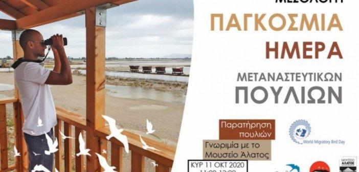 Γιορτή της παγκόσμιας ημέρας μεταναστευτικών πουλιών στο Μεσολόγγι