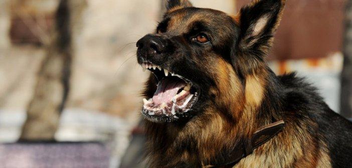 Μεσολόγγι: Σκύλος δάγκωσε 11χρονο αγόρι στο πόδι