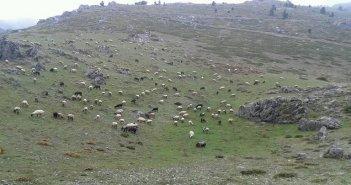 Ένωση Αγρινίου: Αρχίζει η ετήσια απογραφή του ζωικού κεφαλαίου