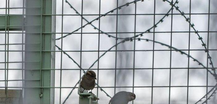 Ο «εμφύλιος» στη Χρυσή Αυγή φέρνει ειδικό σχέδιο στις φυλακές