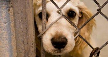 Κακούργημα ο βασανισμός ζώων