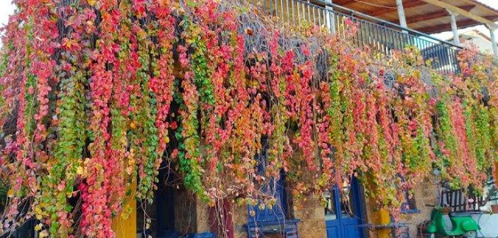 Κωνωπίνα: Φθινοπωρινές μαγευτικές εικόνες εν μέσω καραντίνας