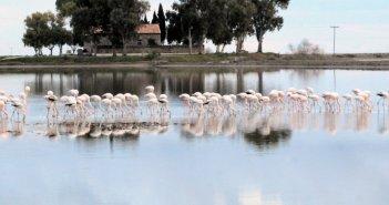 Μαγευτικές εικόνες από τη Λιμνοθάλασσα Μεσολογγίου