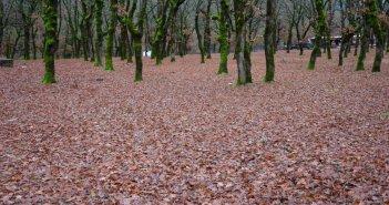 Φθινοπωρινές εικόνες από τον Βάλτο Αιτωλοακαρνανίας