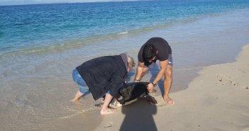 Λευκάδα: Νεκρές χελώνες caretta – caretta στην παραλία του ΤΑΟΛ