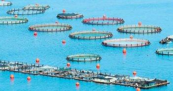 Κ. Καραγκούνης: Προχωρούν οι αποζημιώσεις από τον «Ιανό» για τους υδατοκαλλιεργητές
