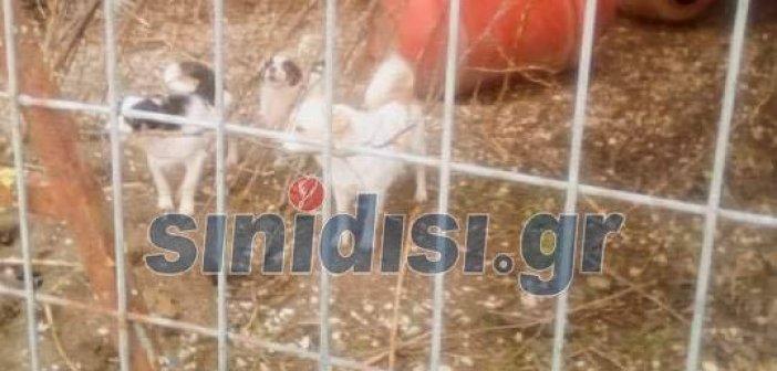 «Ξαναχτυπά» ο «συλλέκτης» ζώων στο Παναιτώλιο; (pics & video)