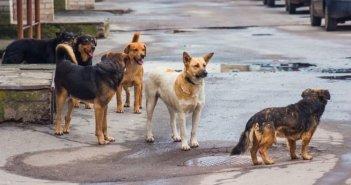 Αγρίνιο: «Κύμα» εγκατάλειψης δεσποζόμενων ζωών