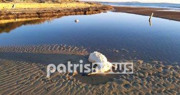 Ροβιάτα Ηλείας: Γέμισε νεκρά πρόβατα η παραλία