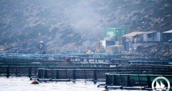 Παρέμβαση του Ινστιτούτου Θαλάσσιας Προστασίας στη συνεδρίαση του Περιφερειακού Συμβουλίου