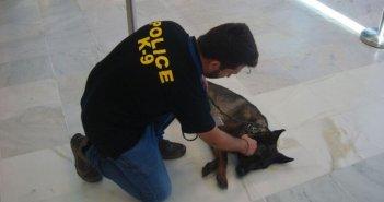 Δυτ. Ελλάδα: H αστυνομική σκυλίτσα Mendy «αποστρατεύτηκε»