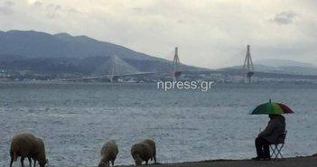 Ναύπακτος : Πήρε ομπρέλα και έβγαλε τα πρόβατα να βοσκίσουν στην παραλία (vid)