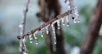 Ανησυχία για ζημιές από τον παγετό στη Δυτική Ελλάδα