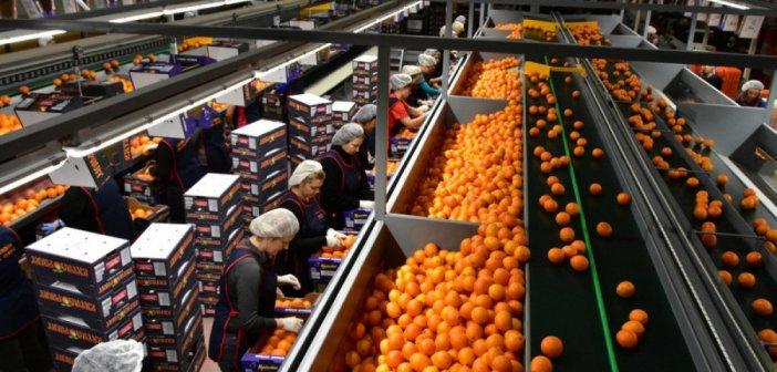 Η αγροδιατροφή τραβά το «κάρο» της Δυτικής Ελλάδας