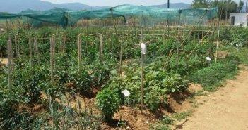 Ξεκινούν οι αιτήσεις για τον Δημοτικό Λαχανόκηπο Αγρινίου