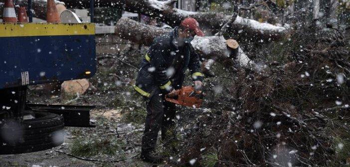 ΚΕΔΕ: Δεν έχουν οι δήμοι την ευθύνη για το κλάδεμα δέντρων κατά μήκος των γραμμών μεταφοράς ενέργειας