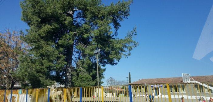 Κρούσμα κορωνοϊού σε εκπαιδευτικό στο  Δημοτικό Σχολείο Καλυβίων – Αναστέλλει τη λειτουργία του για 14 μέρες