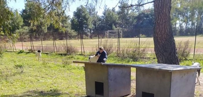 Δήμος Ι.Π. Μεσολογγίου: Μέριμνα για τα αδέσποτα ζώα λόγω χαμηλών θερμοκρασιών