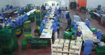 Ανακοίνωση πρόσληψης εργατών στο συσκευαστήριο σπαραγγιών στη Νεάπολη