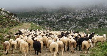 Απογραφή ζωικού κεφαλαίου βοοειδών Π.Ε Αιτωλ/νίας