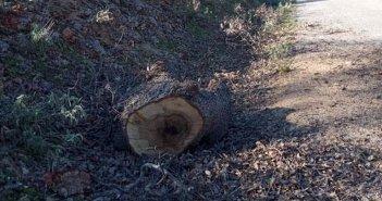Ερώτηση Κυριάκου Βελόπουλου: Λαθροϋλοτόμοι συνεχίζουν το καταστροφικό τους έργο στο Βελανιδοδάσος