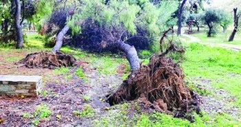 Δήμος Αγρινίου: Αλλαγή αρμοδιότητας για τα επικίνδυνα δένδρα