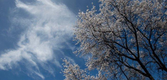 Αραιή συννεφιά και άνοδος της θερμοκρασίας τη Μ. Τετάρτη