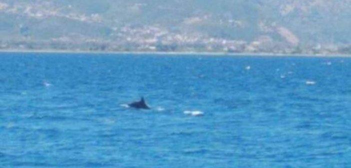 """Ναύπακτος: Δελφίνια """"παίζουν"""" πολύ κοντά στην παραλία της Ψανής! ΒΙΝΤΕΟ"""