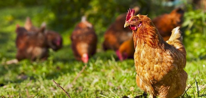 Και οι πτηνοτροφικές μονάδες εντάσσονται στον Αναπτυξιακό με τροποποιητική ΚΥΑ των Λιβανού, Παπαθανάση και Οικονόμου