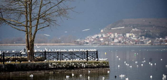 Γυναίκα έπεσε στην λίμνη Ιωαννίνων την έσωσαν οι προπονητές του ΝΟΙ μετά από κατάδυση