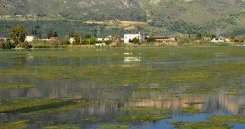 """Θεαματικός αλλά όχι ευωδιαστός ο """"ευτροφισμός"""" στην ανατολική πλευρά της λιμνοθάλασσας"""